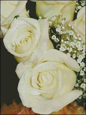 s08-071 Розы